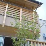 竣工写真_シンボルツリー:埼玉県坂戸市の建築写真