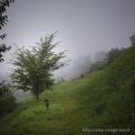 ときがわ町 堂平山 霧の風景